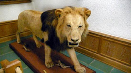 Jagdmuseum Wulff