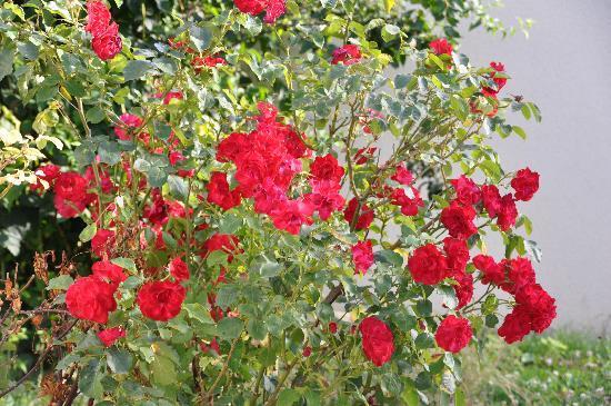 Fontana di Trevi : Un bouquet de roses pour ce restaurant