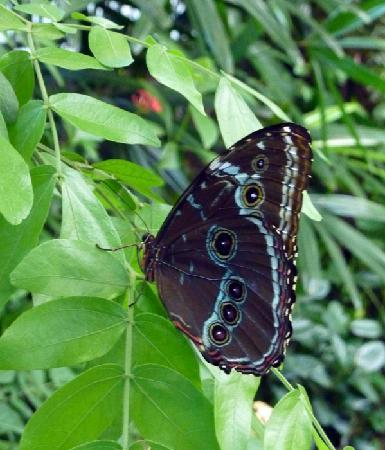 Florida Museum of Natural History: Butterfly