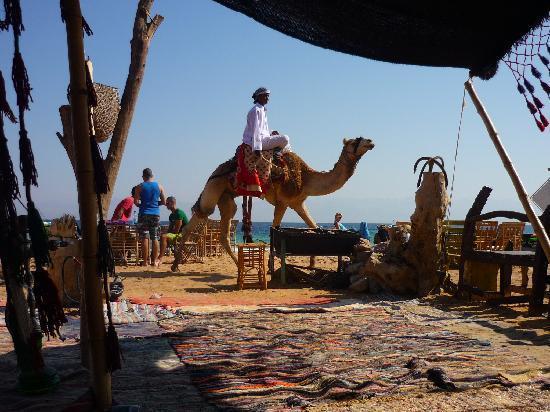 Habiba Beach Lodge: Camel trip in Habiba