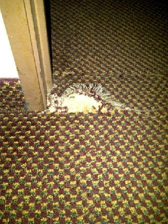 Quality Inn & Suites: Rip in the carpet