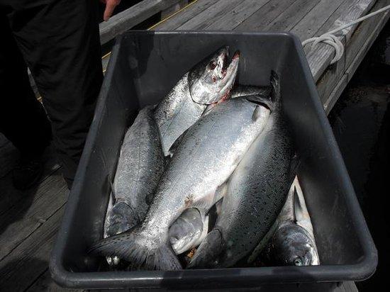 Beasley's Fishing Charters: Bucket #1