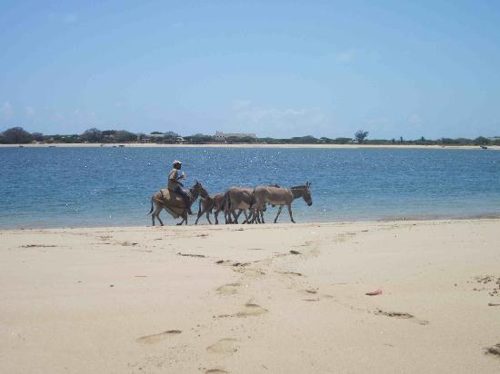 Baitil Aman Guest House: beach
