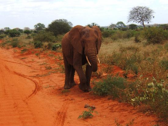 Watamu, Kenya: Tsavo East National Park