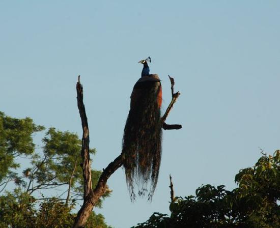 Elephant Lane: Wild life at Udawalawe