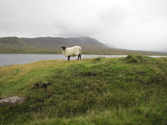 Westport, Irlanda: On the Nephin Drive