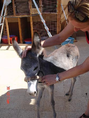 ACE- Animal Care in Egypt: Felix - a resuced baby donkey