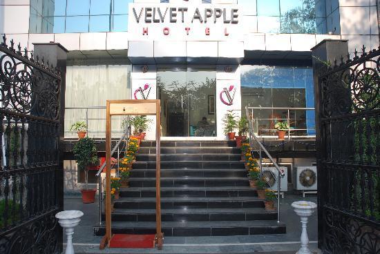 벨벳 애플 호텔 사진