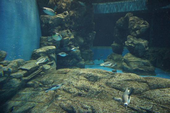 Shimonoseki, Japan: ペンギンがいっぱい
