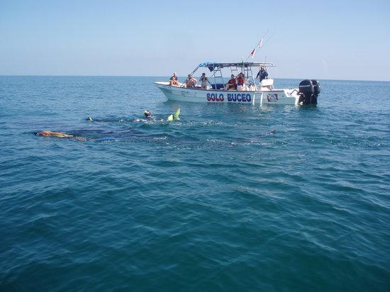 Casa Las Tortugas Whaleshark Tour