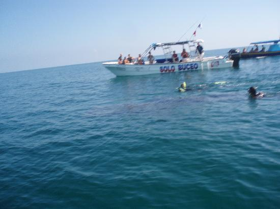 Casa Las Tortugas Whaleshark Tour: Fischie