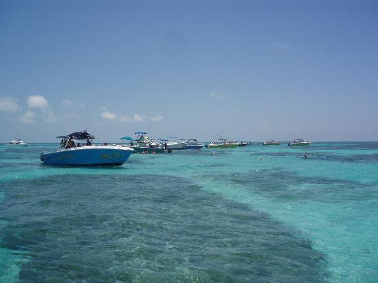 Casa Las Tortugas Whaleshark Tour: Am Riff
