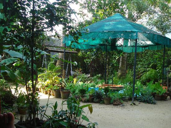 Walton's Home Stay: The Tropical Garden