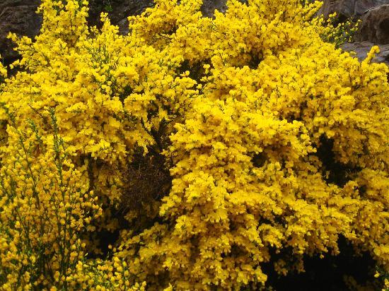 Bungalows Arauco Hue: flores en primavera en el circuito chico en bahía lópez bariloche