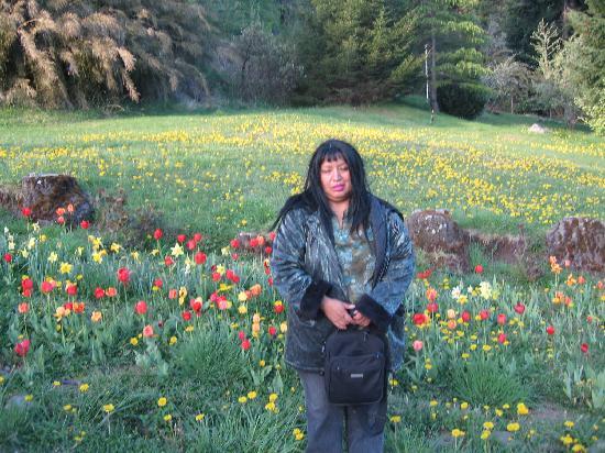 Bungalows Arauco Hue: tulipanes en primavera en bariloche