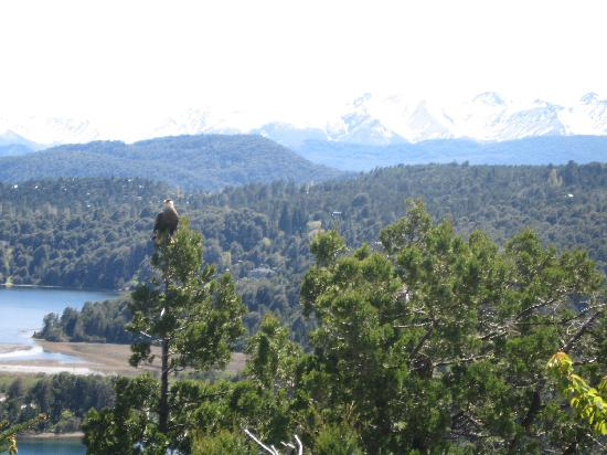 Bungalows Arauco Hue: ave en un mirador en circuito chico Bariloche