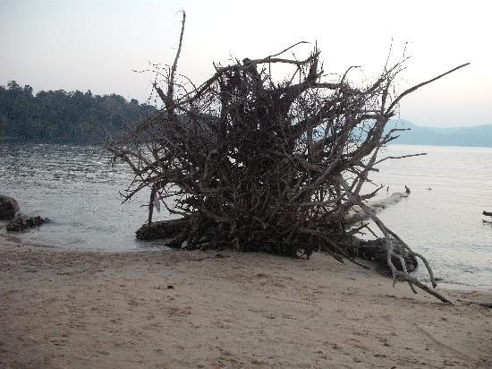 Port Blair, India: Tree - after Tsunami