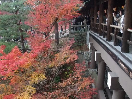 Kyoto Prefecture, Japón: Tofukuji, Nov/28/2010
