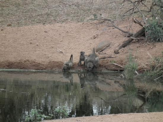 Garonga Safari Camp: View of watering hole