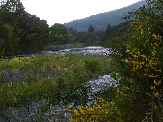 Turangi Leisure Lodge : nearby  Tongariro River