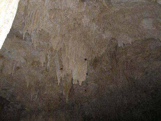 Anatakitaki Cave (Kopeka Cave): birds' nests