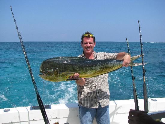 Mike's Marina Fishing Charters SRL: Big Bull Dolphin AKA Mahi or Dorado
