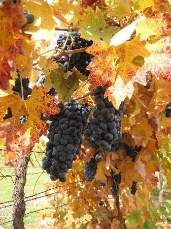 Deaver Vineyards Winery Tourist Attraction 12455