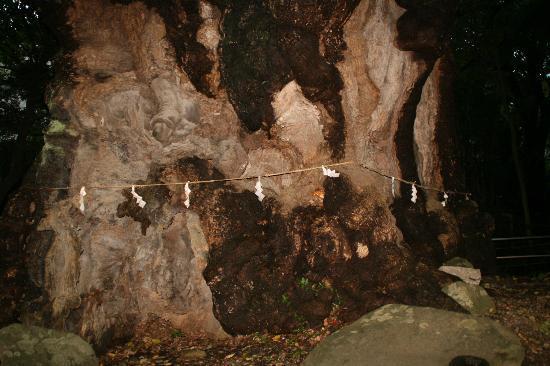 Kinomiya Shrine: 樹齢2千年、全国2位の巨木認定