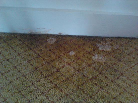 Image result for mouldy carpet images