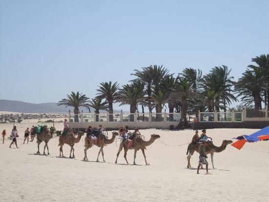Hotel Riu Palace Tres Islas: Camels.