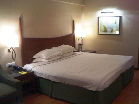 The Carlton : Room