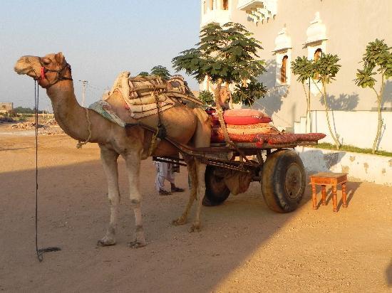 Barsingha Villa : Take a camel to diner