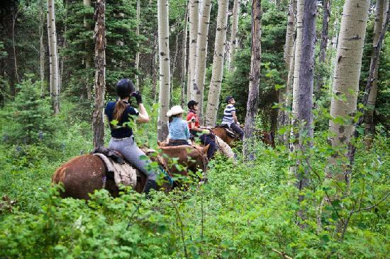 Wilderness Trails Ranch: Beautifull woods