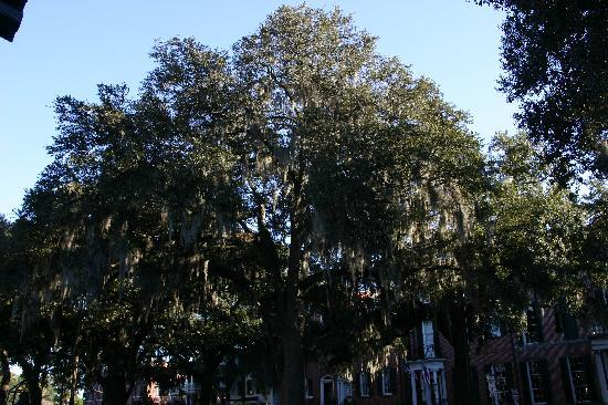 Savannah, Geórgia: an der Oglethorpe Avenue