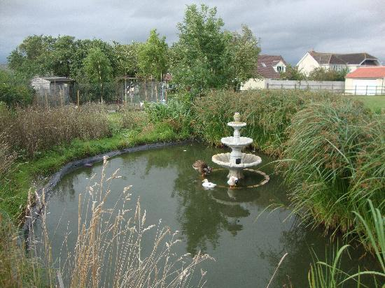 Millbatch Farm: Huge Back Garden - Looking Back Towards House
