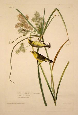 Tam O'Neill Fine Arts Gallery: Tam O'Neill Fine Arts, Audubon Birds of America