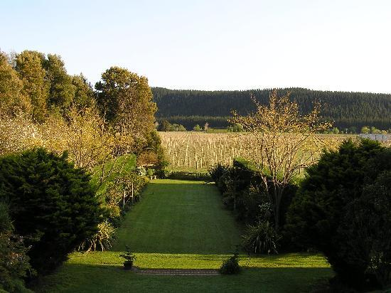 Esk Valley Lodge : View from the Sauvignon room