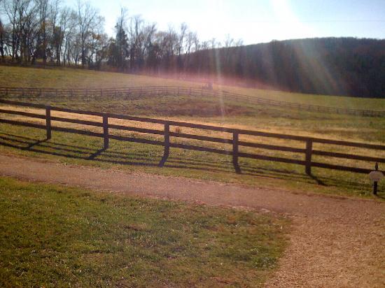 James Madison's Montpelier: Thoroughbred pasture