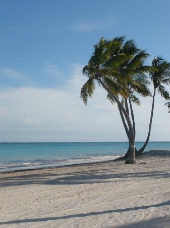 Sanctuary Cap Cana By Playa Hotels Resorts Juanillo Beach Public