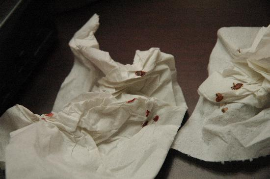 Comfort Inn & Suites Airport & Expo: Dead Bed Bugs
