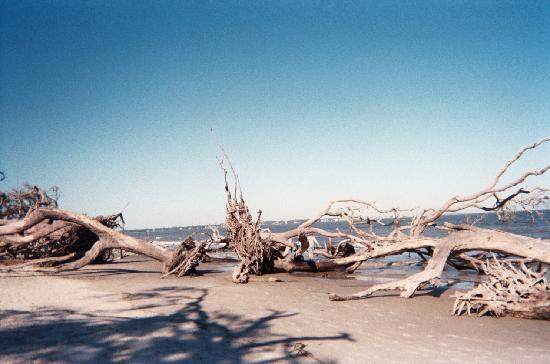 บรันสวิก, จอร์เจีย: Driftwood Beach @Jekyll Island
