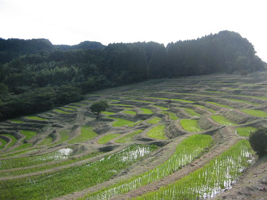 Oyama Rice Terrace