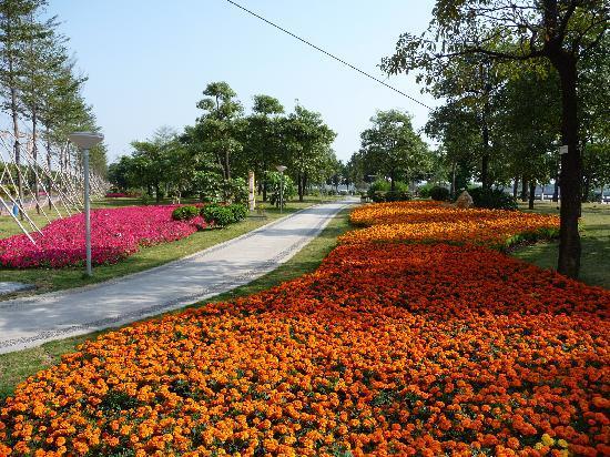 Tinho Town: Pearl Riverside Drive Flowers