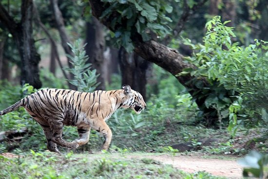 Nagarhole National Park, India: Highlight of our trip