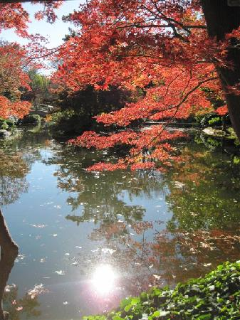 Fort Worth Botanic Garden: Fall At Japanese Garden
