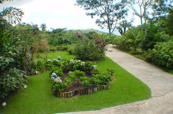 Pura Vida Gardens and Waterfalls: Garden Path