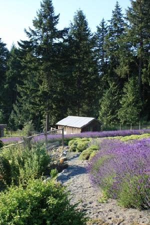 Damali Lavender Farm and B&B: Lavender Pathway