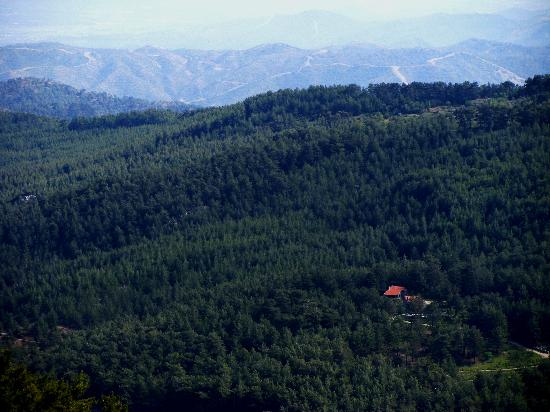 Dikencik Cottages: in forest