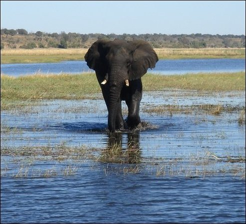 Nogatsaa and Tchinga : wild elephant