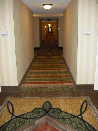 هيلتون جاردن إن ألينتاون بيت لحم إيربورت: Hallway